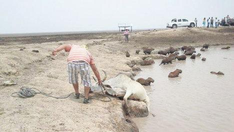 Crisis ambiental en Casanare 2014